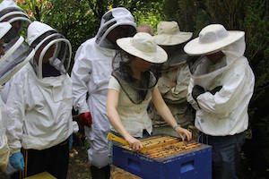 Galtee Bee Breeding Group
