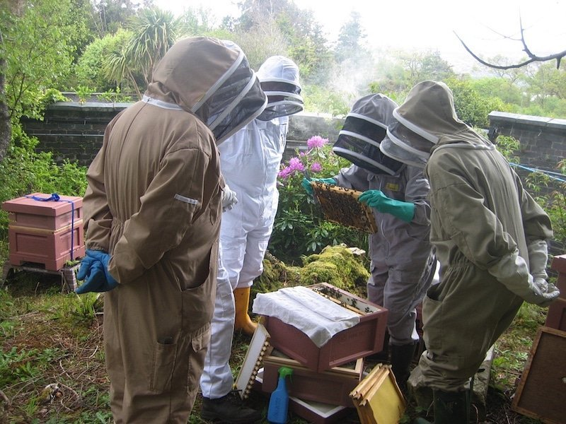ardnamurchan hive inspection copy