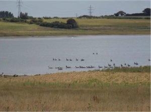 Abberton Reservoir - Essex