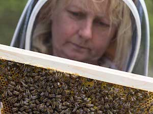 Lancashire Black Bee Project