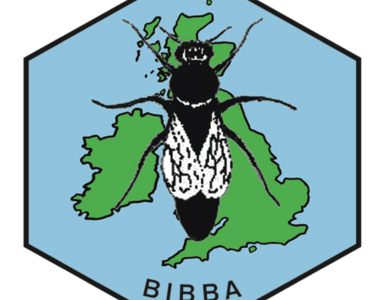 BIBBA Monthly – March 2021