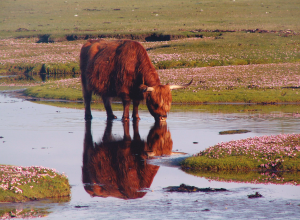 Sea Pinks and June's reflections