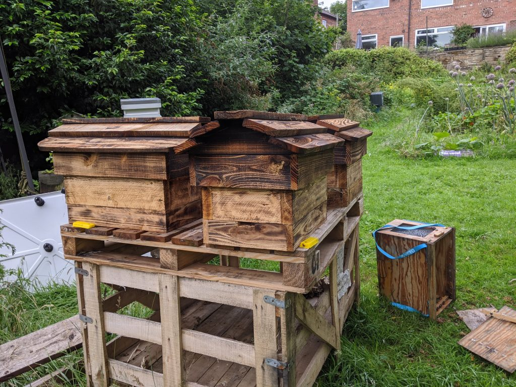 Empty Queen cages neatly at the side of the nucs before a storm blew them to the ground