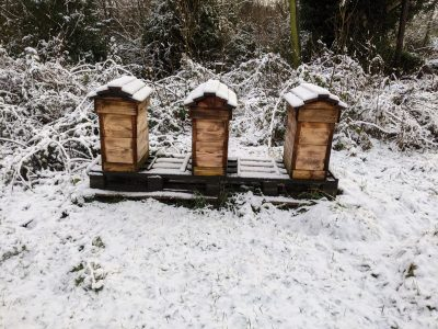 Overwintering nucs. The bees are very quiet inside. The upper box is full of stores.