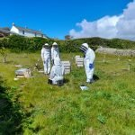 Ruth and Graham's apiary on Bryher